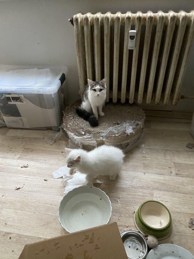 Pokoj s kočkami chovanými v nevhodných podmínkách